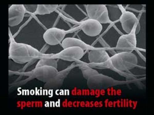 harm Do sperm colds