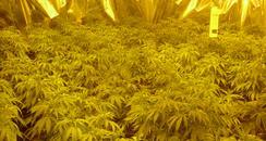 Clifton Cannabis factory 4