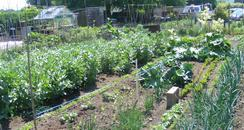 Allotments in Sandy