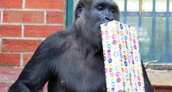 Gorilla Howletts