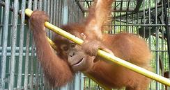 Cambridgeshire Orangutan Rescue