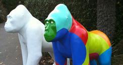 Bristol Zoo Gorillas