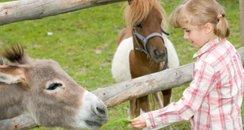 Feed Pony