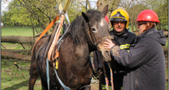 Horse Myah rescued by firefighters