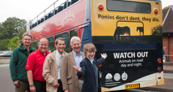 New Forest pony campaign