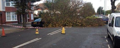 Hove Storm Fallen Tree