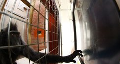 Marwell monkey touch-screen