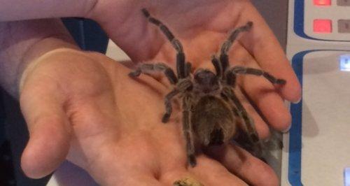 Ed's Forfeit Spider