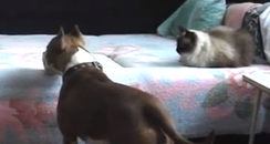 dog looking at a cat sitting on a bed