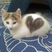 Image 6: A cat with a heart shape in its fur