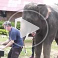 Elephant playing the piano with it's trunk