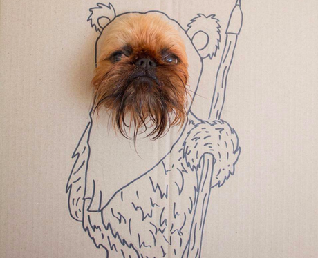 A dog's head in a drawing