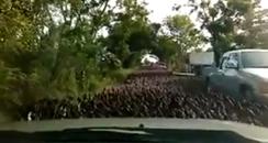 Duck swarm