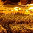 £1.5m Cannabis Waltham Abbey
