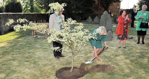 Duchess of Cornwall plants wedding tree in Tetbury