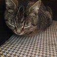 Wanborough cat