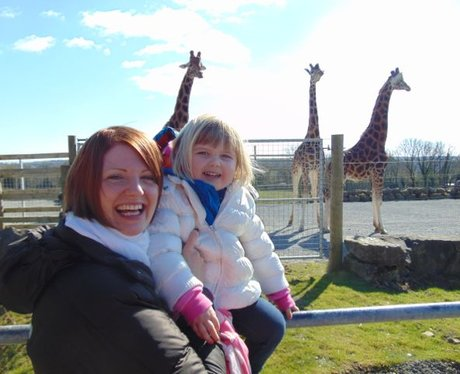 Two local Welsh ladies admiring the Giraffes.