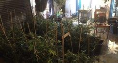 South Mimms Cannabis Factory